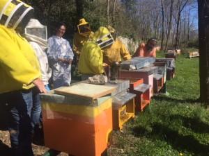 visita apiario Rumiz