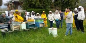 visita apiario Manzano 2